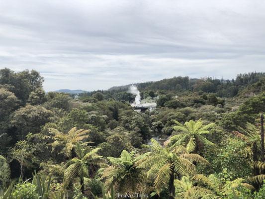 Geiser Te Puia in Rotorua
