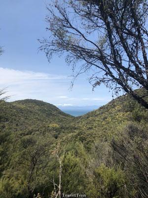 Groene heuvels in Abel Tasman National Park