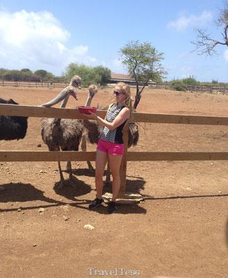 Struisvogelfarm Curaçao