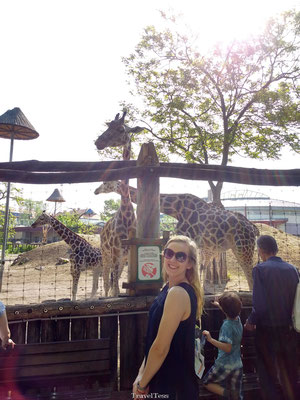 Girafe in Boedapest Zoo