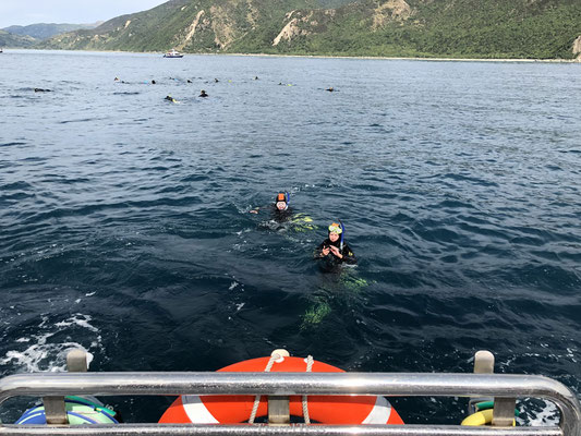 Dolphin Encouter Kaikoura