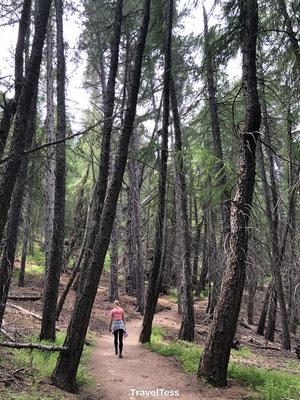 Hiken Mount John