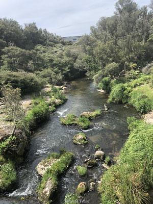 Vulkanische rivier in Te Puia