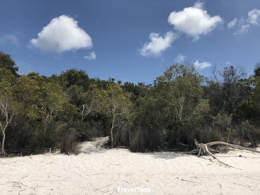 Fraser Island strand