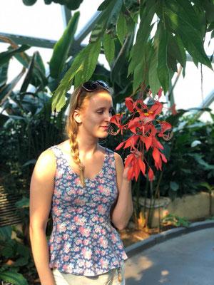 Brisbane Botanische tuin