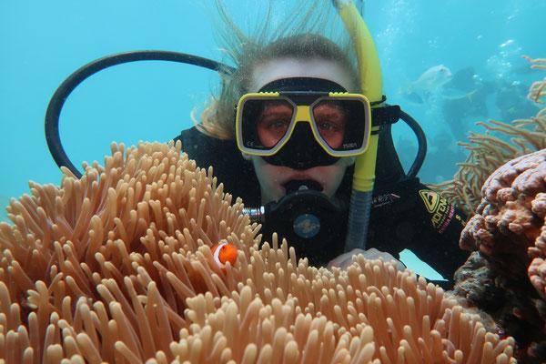 Duiktocht Great Barrier Reef
