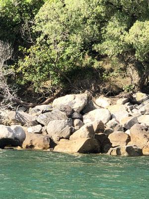 Zeehonden spotten in Abel Tasman Park