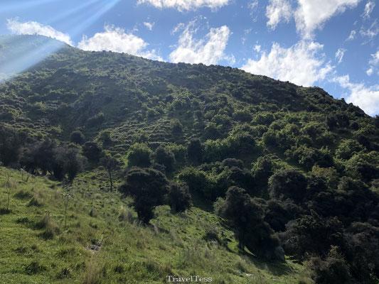 Groene Roys Peak heuvel