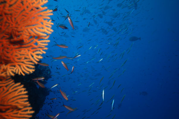 Vissen Great Barrier Reef