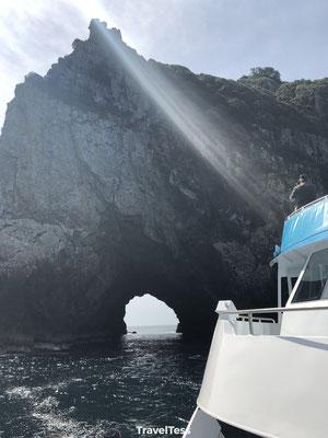 Dolfijnen tour Bay of Islands