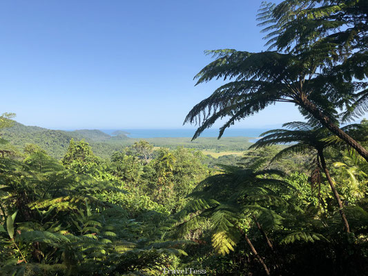 Regenwoud Cape Tribulation