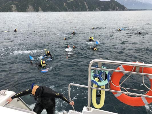 Zwemmen met dolfijnen in Kaikoura
