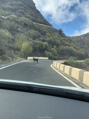 Berggeit op de weg