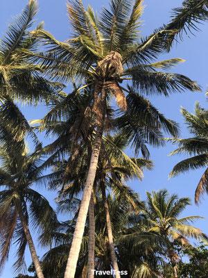 Palmbomen Cairns