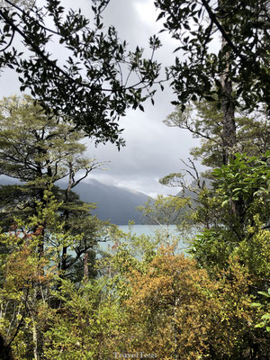 Bossen rondom Nelson Lakes