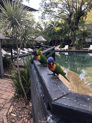 Lori vogel's Koala Village