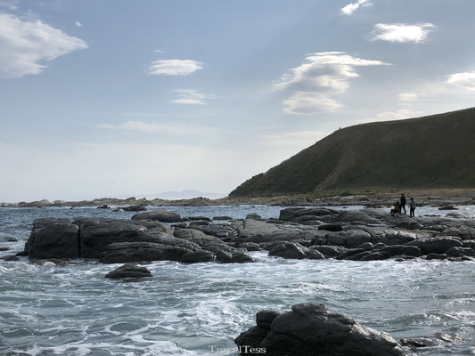 Seal colony Kaikoura bezoeken