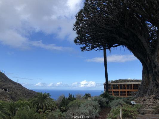 Drakenboom Tenerife