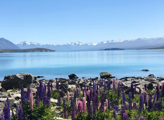 Perfecte plaatje Lake Tekapo