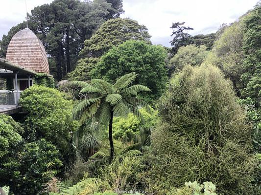 Wellington Botanische tuin