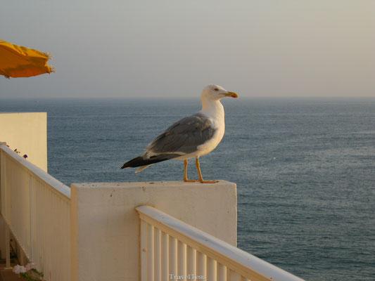 Meeuw op balkon in Albufeira