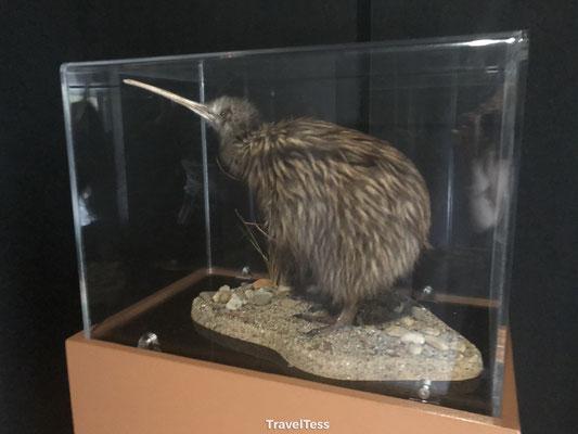 Opgezette Kiwi