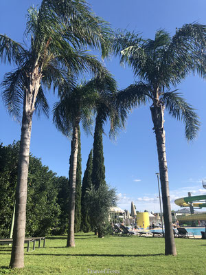 Palmbomen Robinson Club Apulia