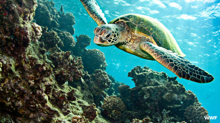 Schildpaddenstrand Turkije