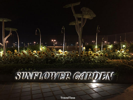 Sunflower Garden Changi Airport