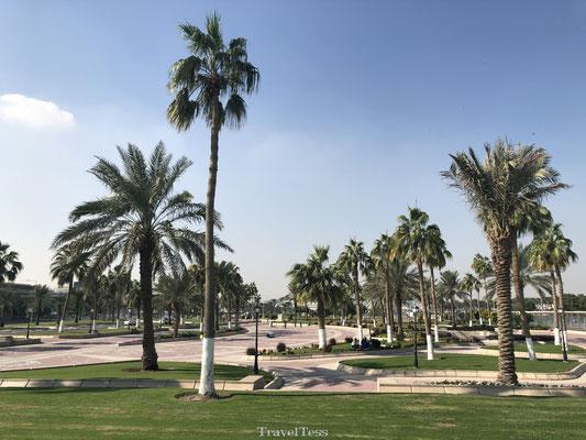 Palmbomen in Qatar