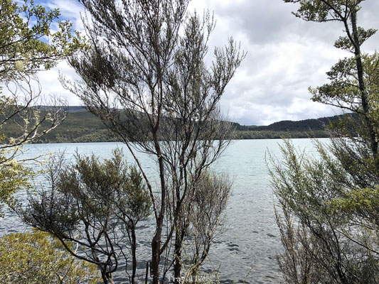 Brunner Peninsula Nature Walk Nelson Lakes