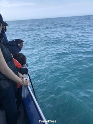 Walvissen opsporen Kaikoura