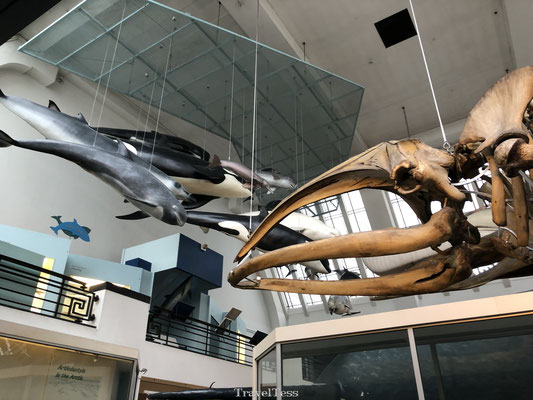 Londen Natural History Museum bezoeken