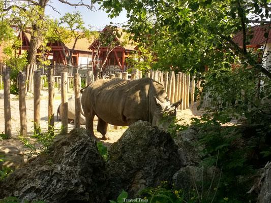 Neushorn in Boedapest Zoo