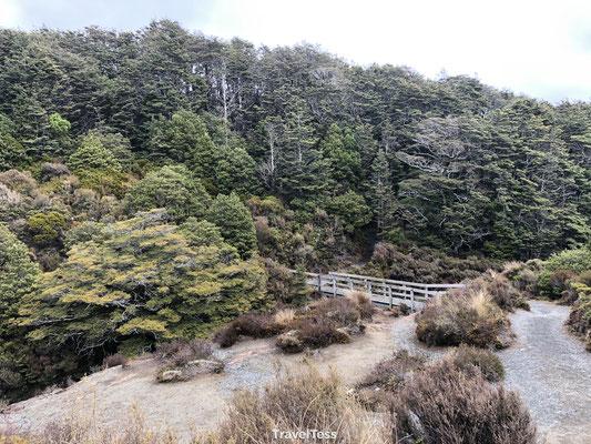 Taranaki Falls Hike