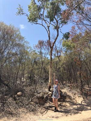 Wilde wallabie gespot Fort Walk Magnetic Island