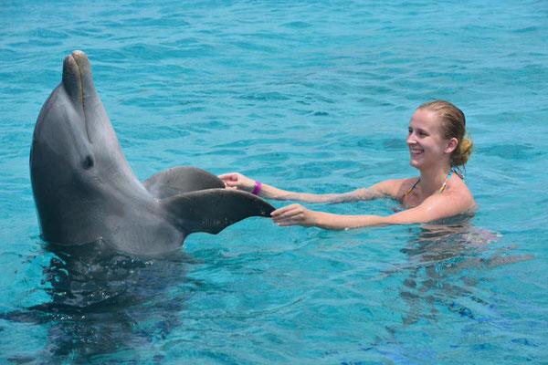 Zwemmen met dolfijnen op Curaçao