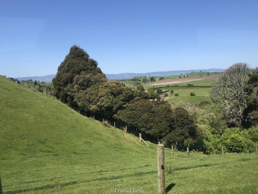 Matamata: dé ideale locatie voor Hobbiton
