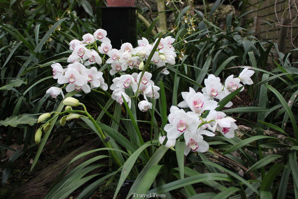 Bloem in Kew Gardens Londen