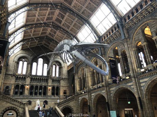 Aankomsthal Londen Natural History Museum