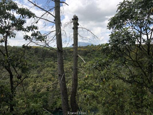 Bossen rondom Huka Falls