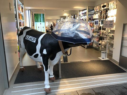 Ale Hop koe