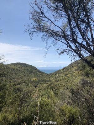 Jungle Abel Tasman National Park