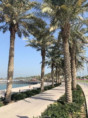 Palmbomen langs de kade van Qatar