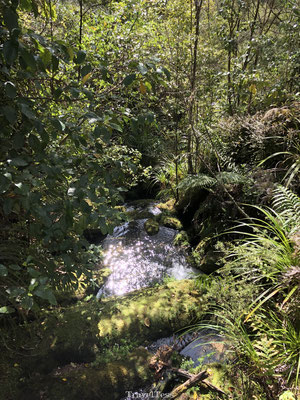 Bossen Abel Tasman National Park