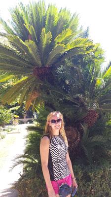 Palmboom Pisa