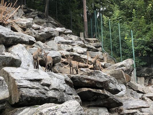 Jonge hertjes in Alpine Zoo