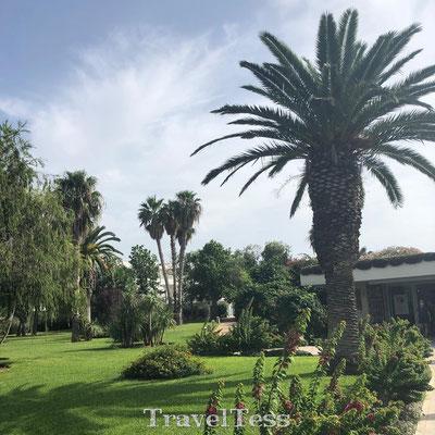 Palmbomen bij ingang Robinson Club Apulia