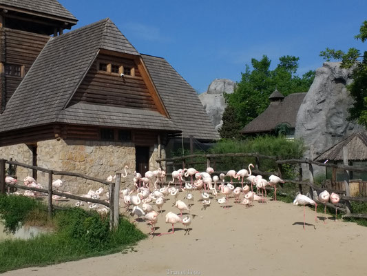 Flamingo's in Boedapest Zoo