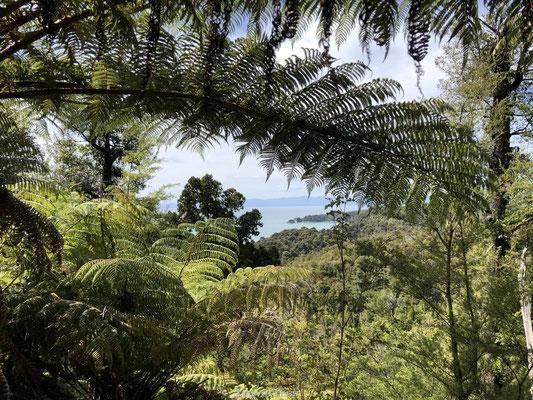Nieuw-Zeelandse varen in Tasman National Park